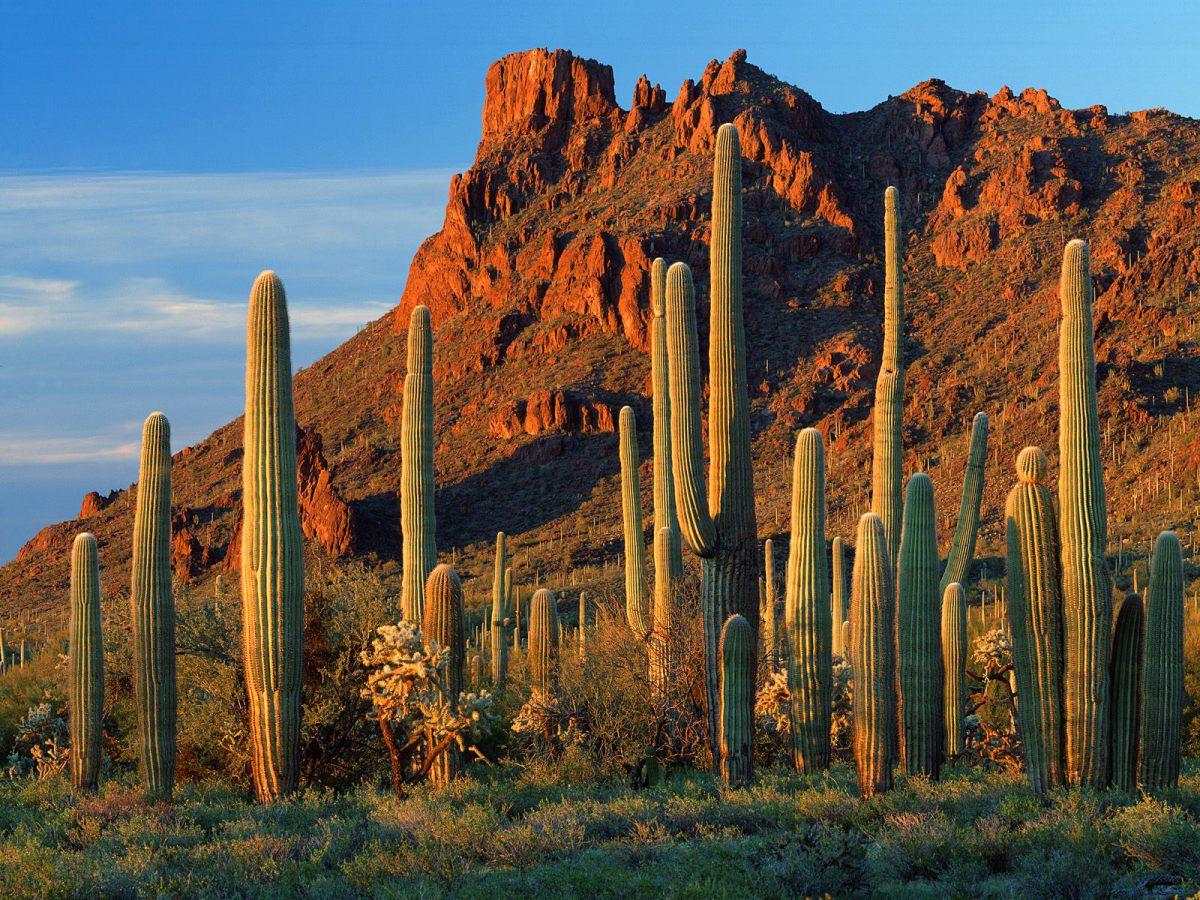 Arizona Desert Cactus HD Wallpapers 1200x900