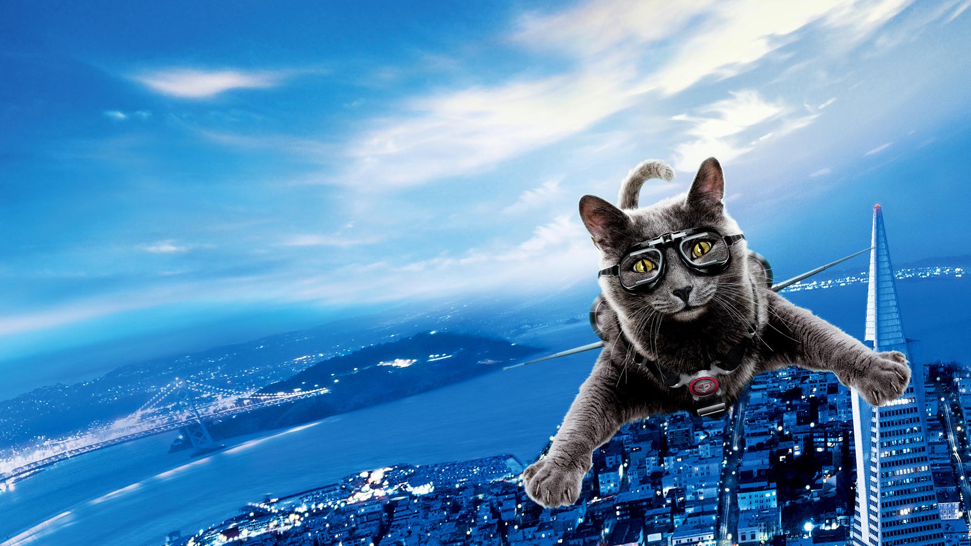 низкая цена красивые картинки на телефон со смешными кошками теме скачать
