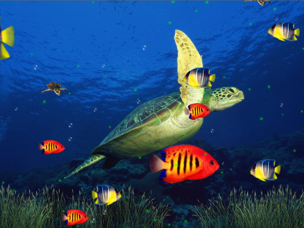 Marine Life Aquarium 3D Screensaver 981x735
