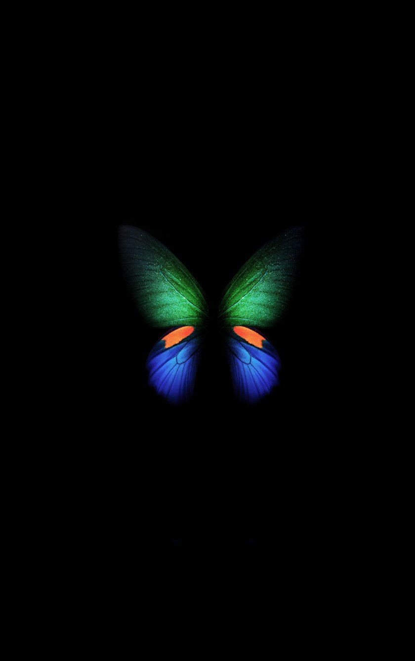 Download Samsung Galaxy Fold green blue butterfly artwork 840x1336