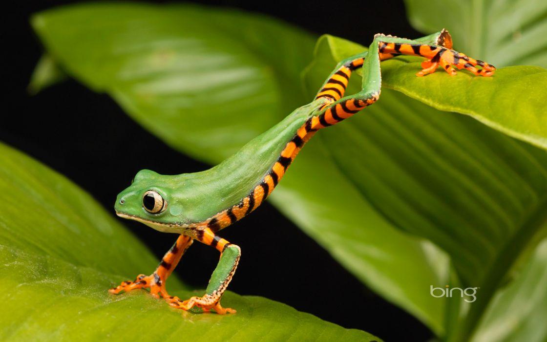 Frogs lemur amphibians wallpaper 1920x1200 57589 WallpaperUP 1120x700