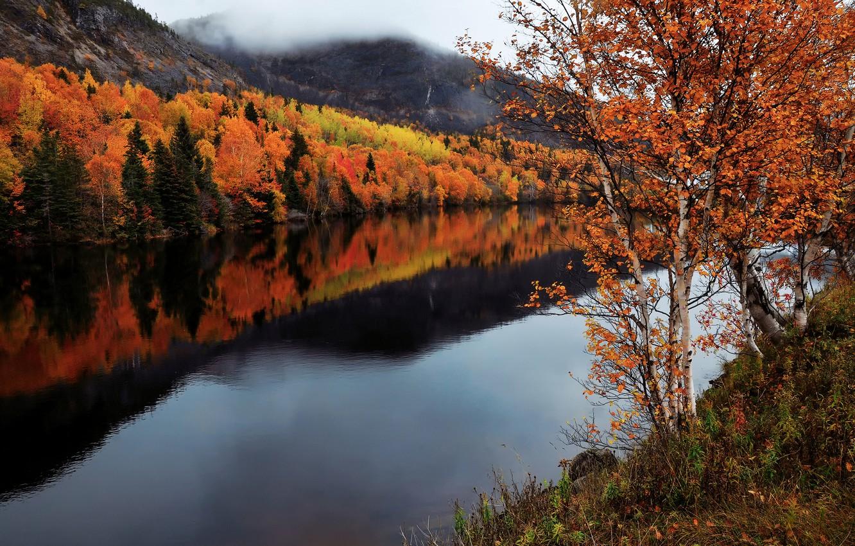 Wallpaper autumn river Canada Humber River Newfoundland and 1332x850