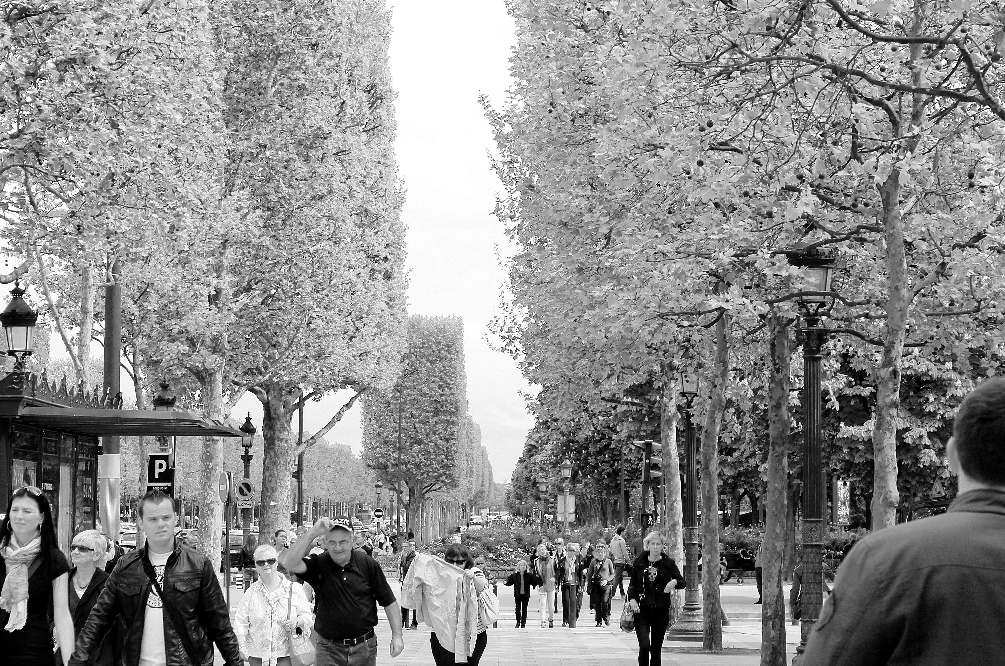 [47+] Paris In Winter Wallpaper On WallpaperSafari