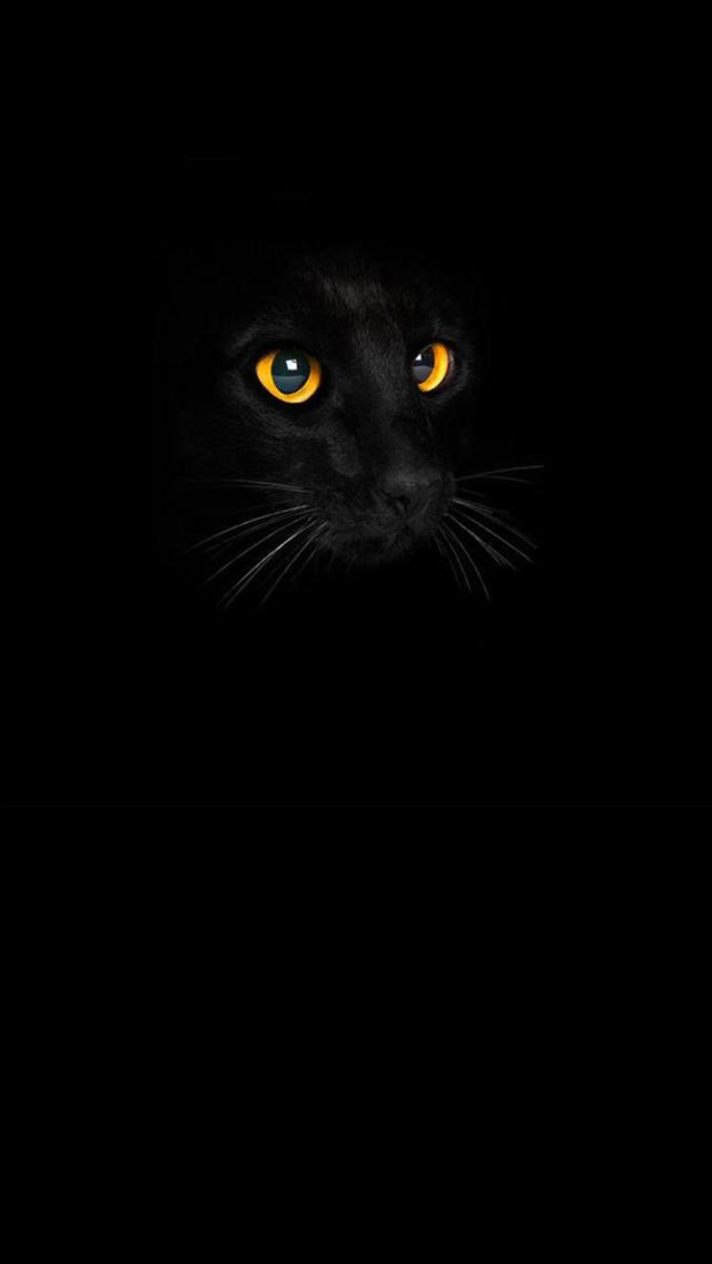 Black Cat IPhone 5 Wallpaper 640x1136
