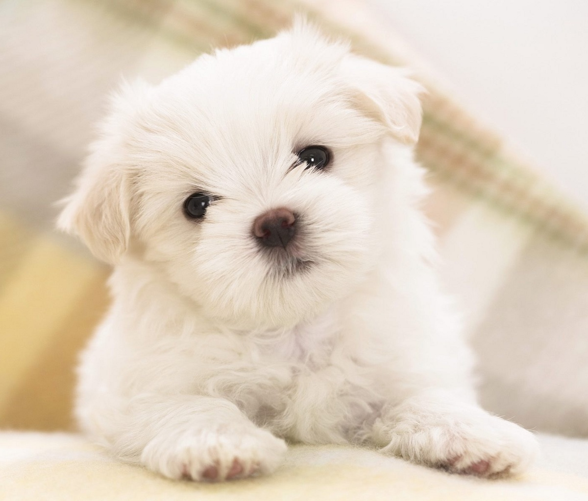 Free Download Free 1200X1024 Cute Dog 1200x1024 Wallpaper