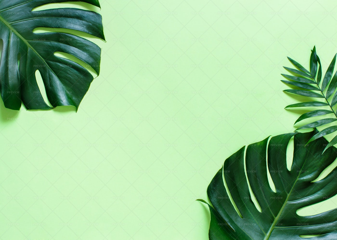Monstera And Palm Leaves Background   Stock Photos Motion Array 1400x995
