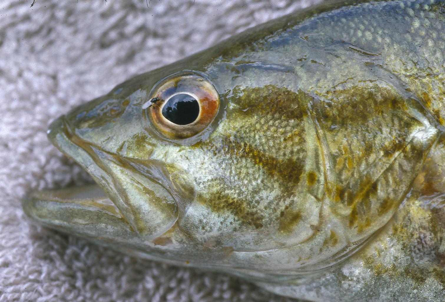 Bass Reference Bass Eye 1511x1025