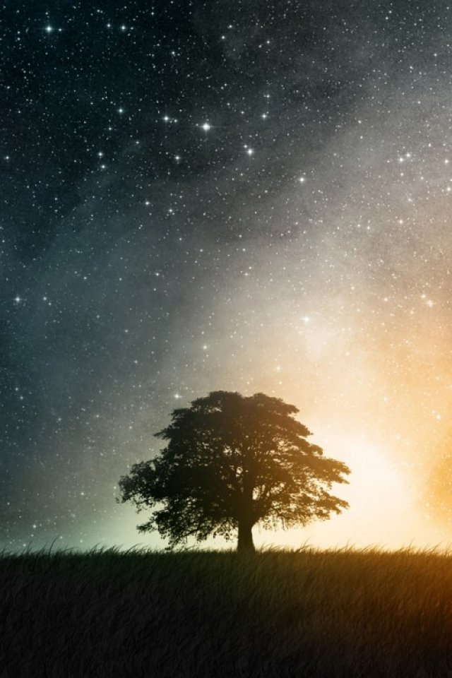 Tree under Star Light iPhone HD Wallpaper iPhone HD Wallpaper 640x960
