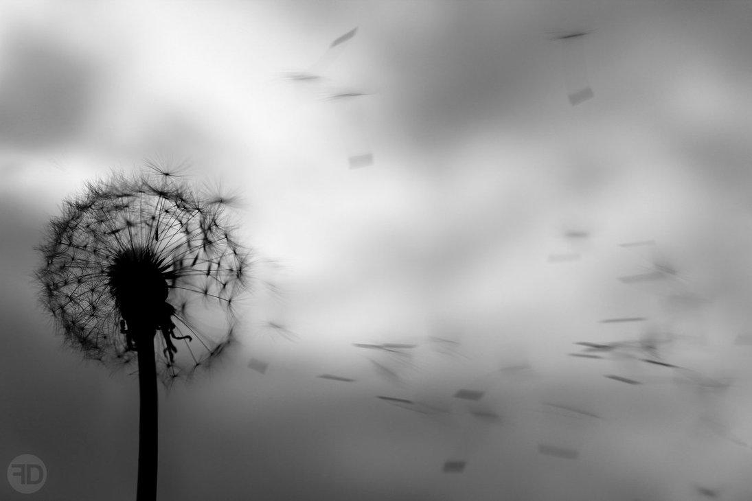 wallpapers dandelion black - photo #10