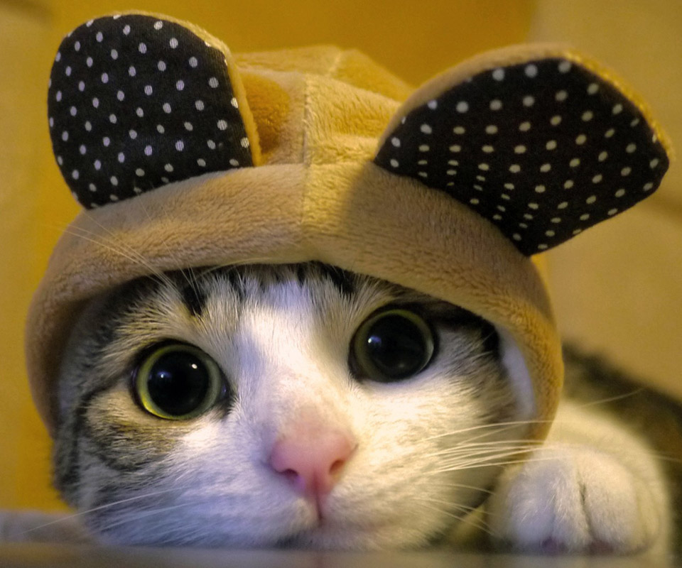 Cutest Wallpapers In The World