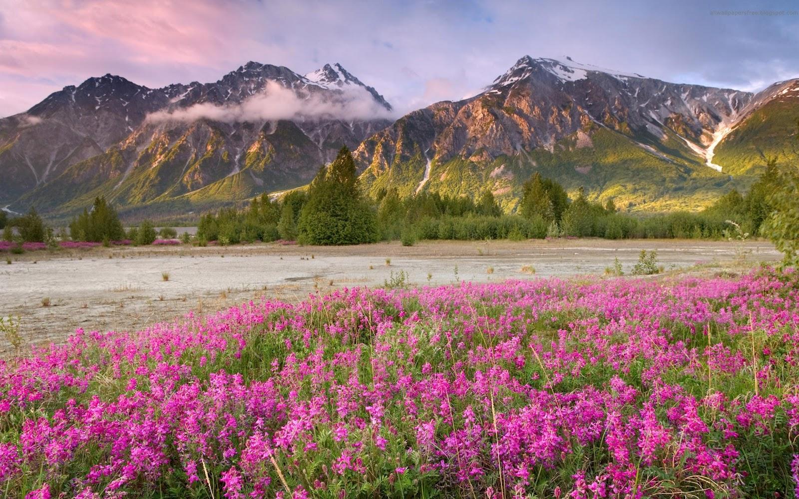 Download Beautiful Canada Landscapes Wallpaper Full HD Wallpapers 1600x1000