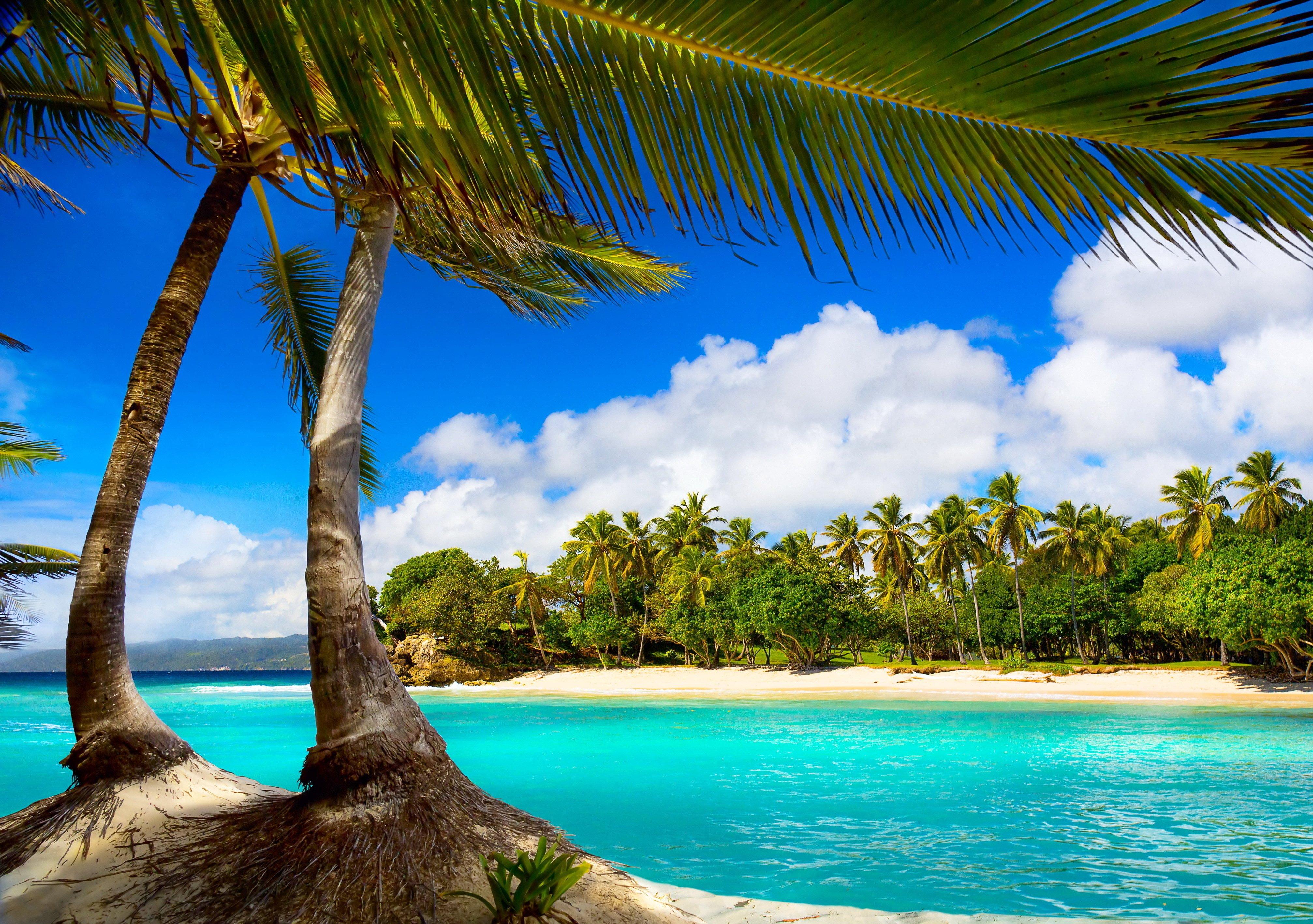 Vacation beach summer tropical sea palms paradise ocean 4028x2835