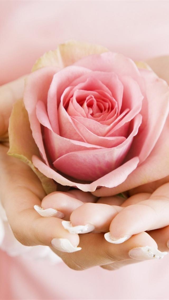 free light pink rose bud iphone 5 wallpaper hd 640x1136 hd iphone 5 640x1136