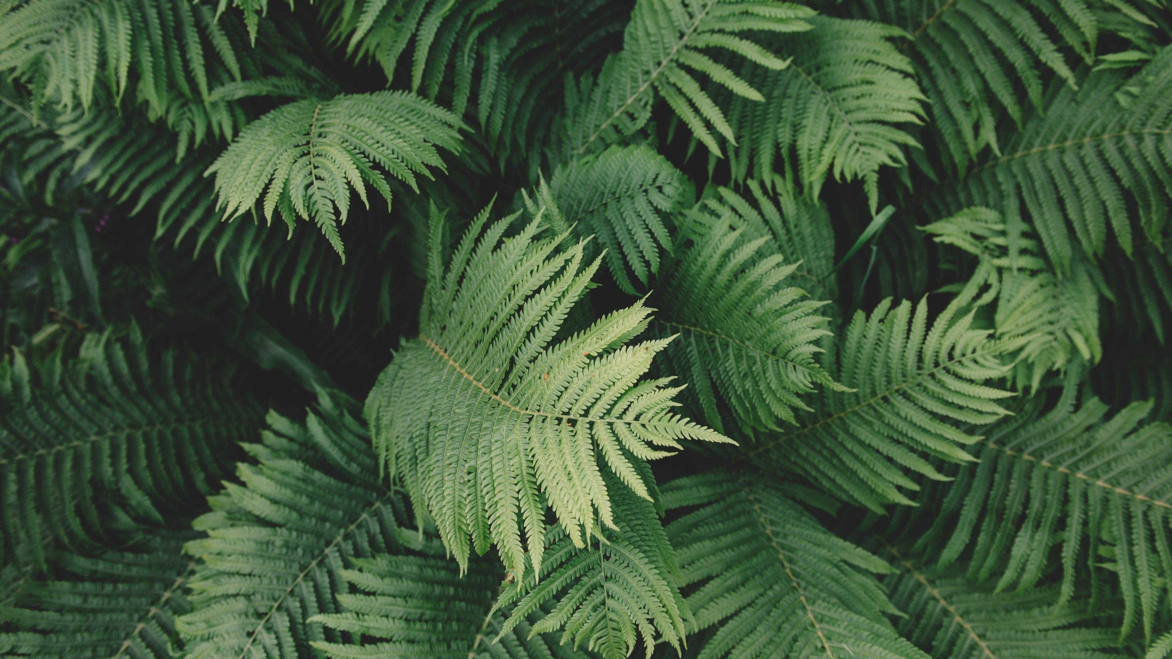 Plant Aesthetic Desktop Wallpaper   Hd Plant 322680   HD 3840x2160