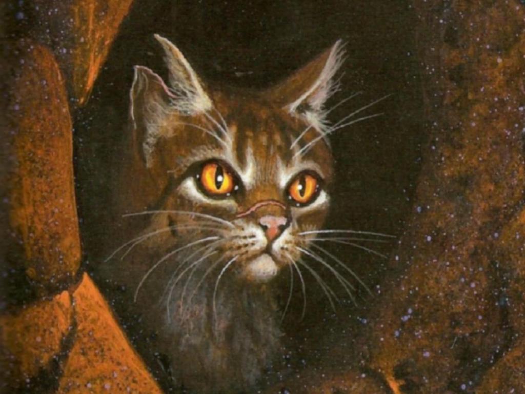 webscomphotosWarrior catswallpaper tigerstar1600x1200 1024x768