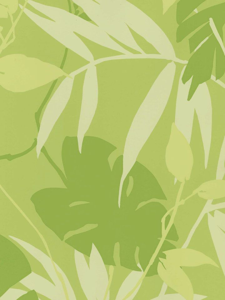 Interior Place   Kiwi Tropical Leaves Wallpaper 4308 httpwww 720x960