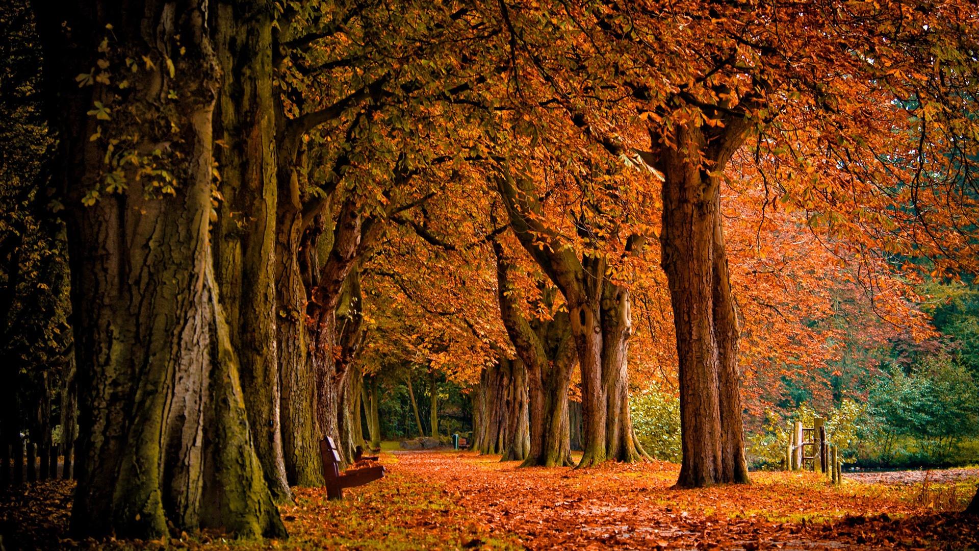 Autumn Park HD Wallpapers Full HD Desktop Wallpapers 1080p 1920x1080