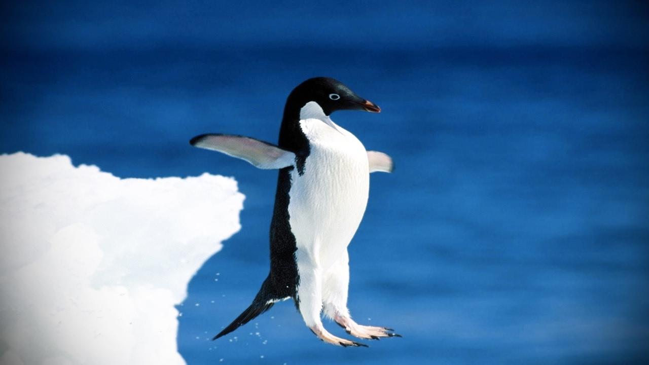 Penguin Fun wallpaper 1280x720