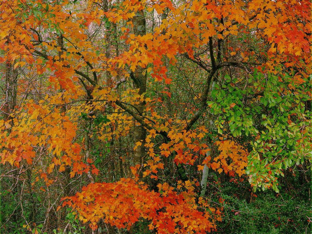 Thanksgiving and Autumn desktop wallpapers 1024x768