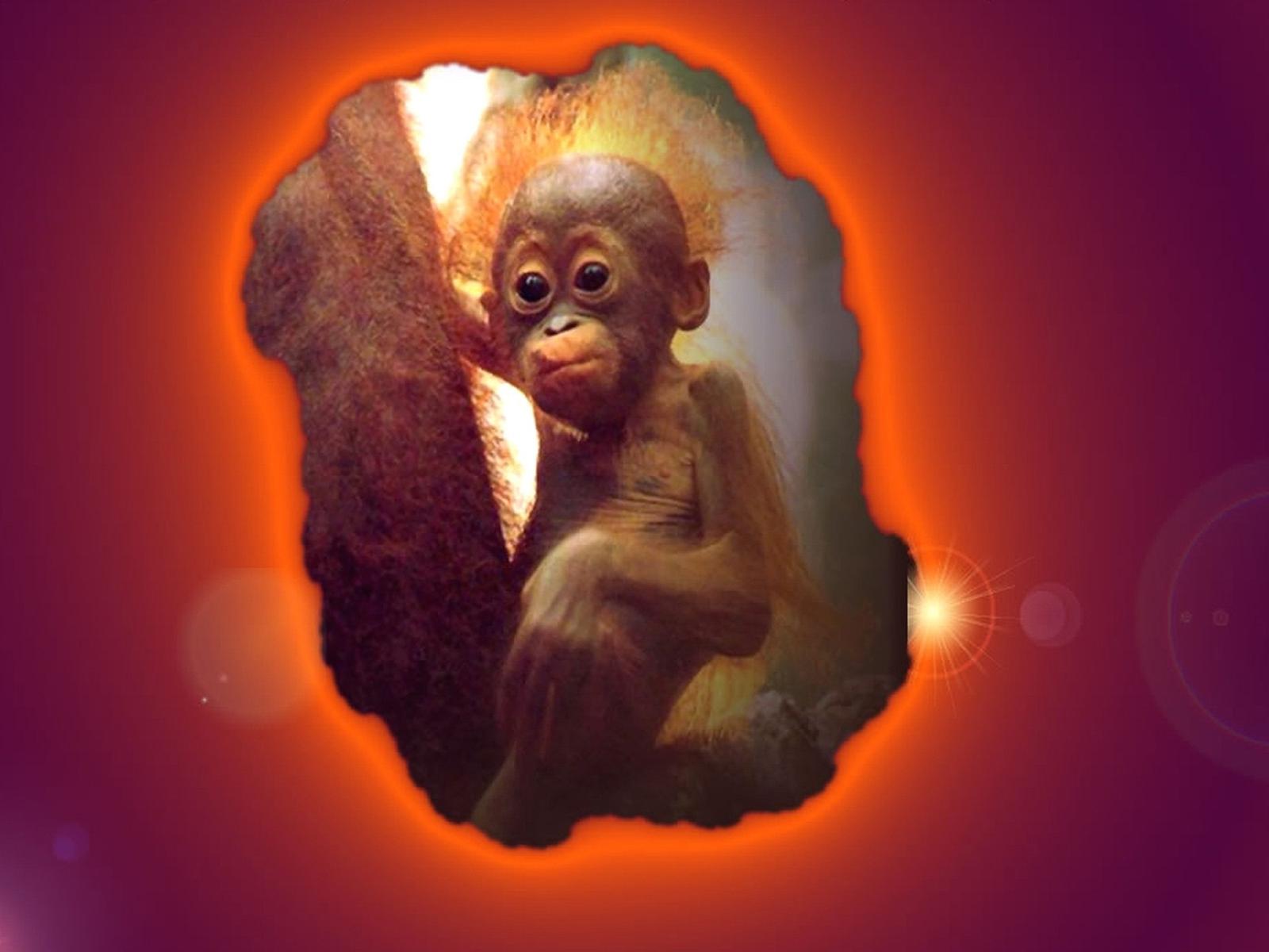 Desk top wallpaper PC wallpaper crazy monkey 1600x1200