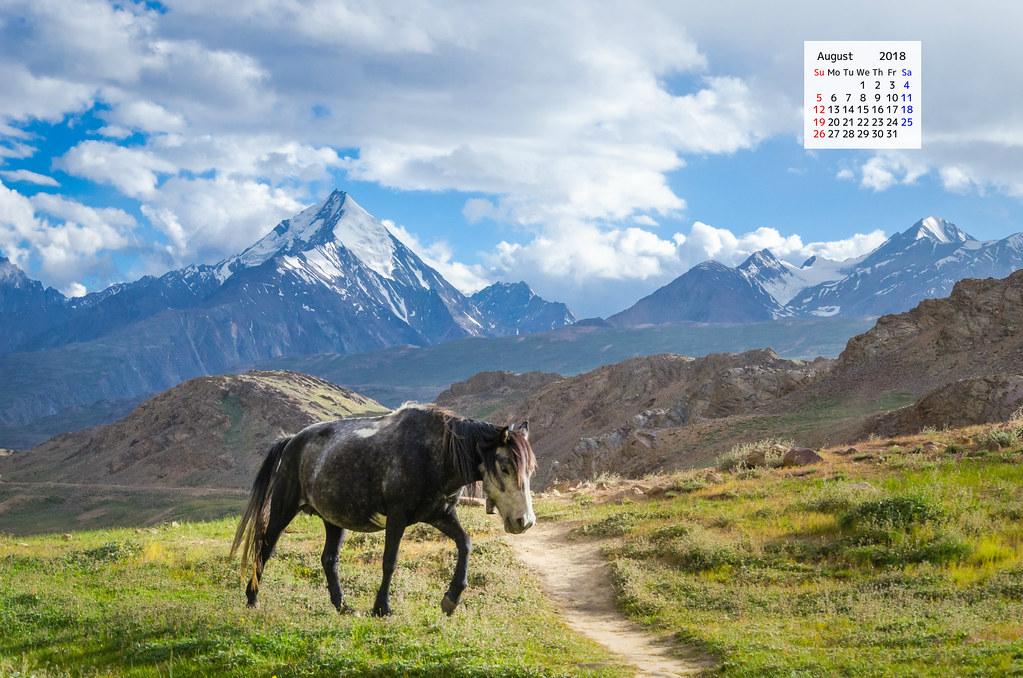 Download August 2018 Calendar Wallpaper A Horse Travel 1023x678