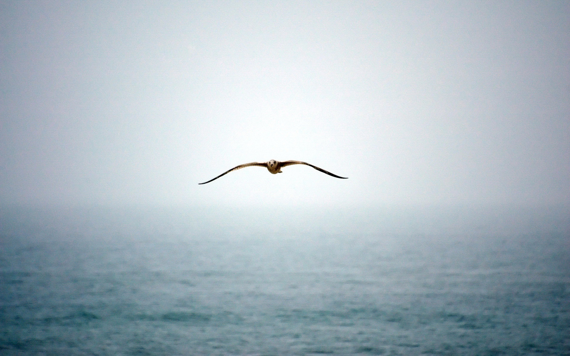 animals blog Birds Flying Wallpapers for Desktop   Animals Wallpapers 1920x1200