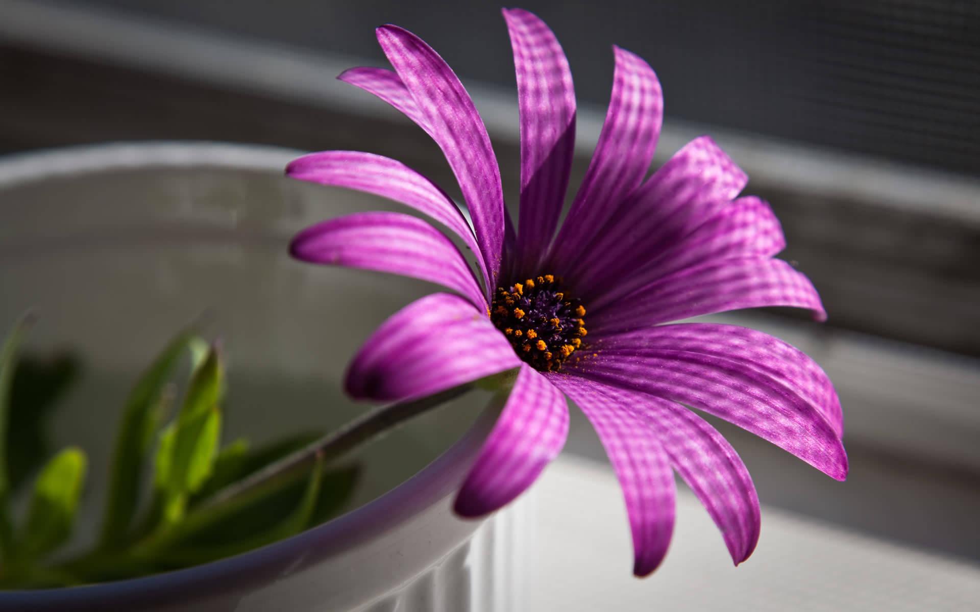 Purple Flower Wallpaper 1920x1200 1920x1200