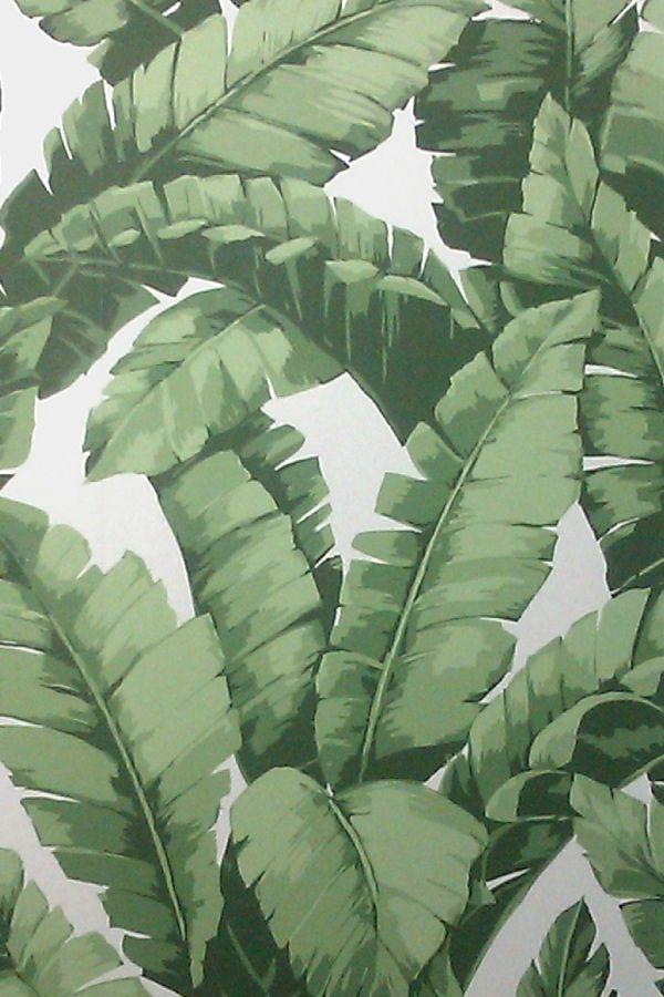 Banana Tree wallpaper Home   Walls Pinterest 600x900