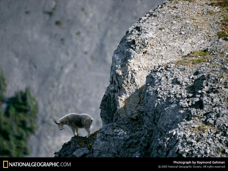 of the Day Picture Photography Wallpapers   National Geographic 800x600