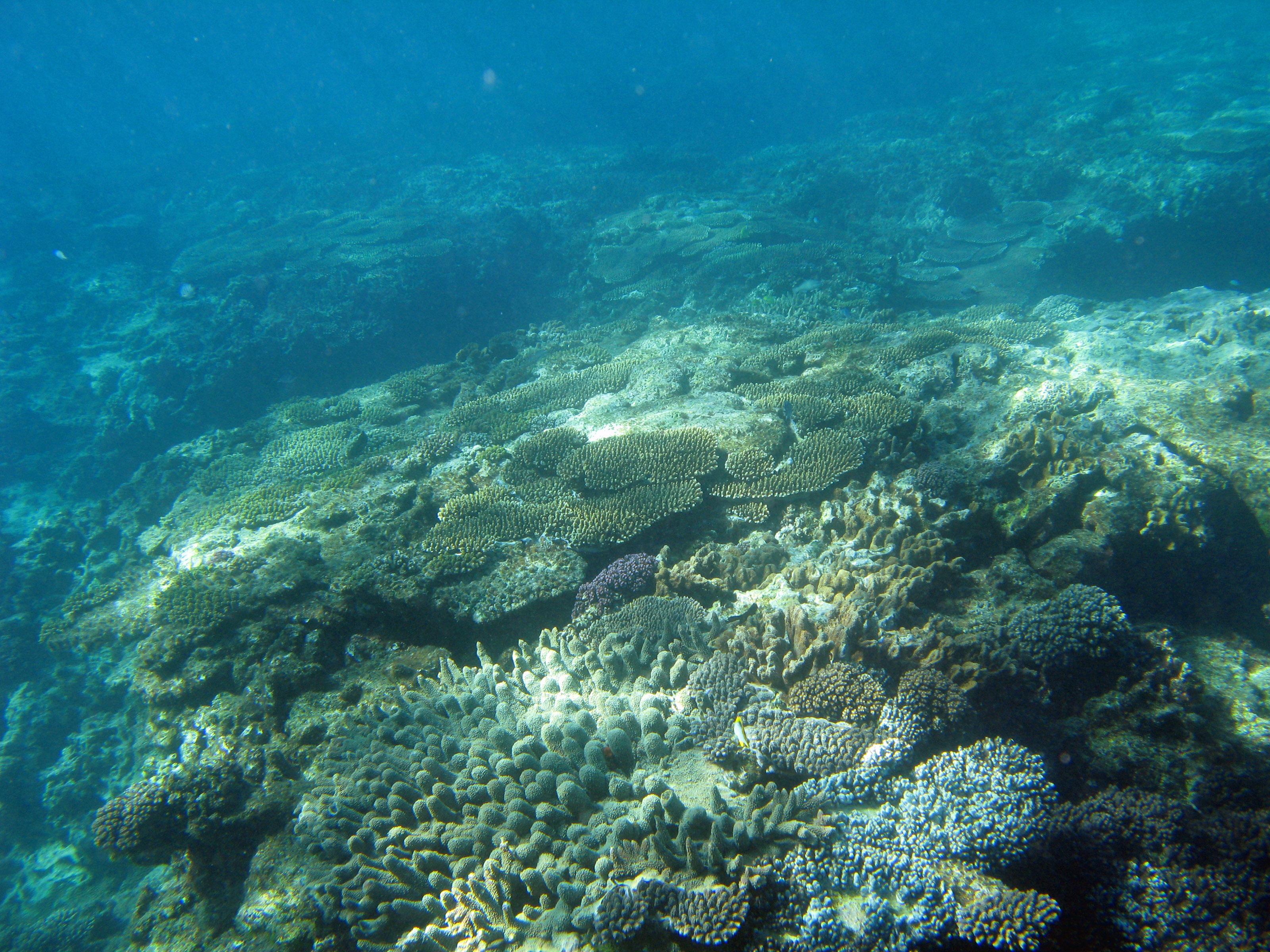 Ocean floor wallpaper wallpapersafari for Ocean s floor