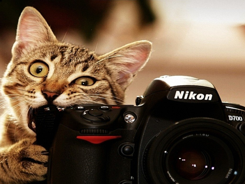 cute cat and nikon camera funny wallpaper HD Wallpapers 1024x768