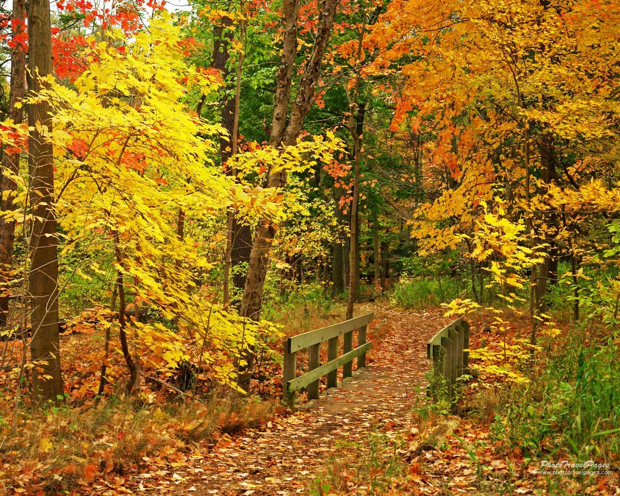 Fall Foliage Wallpaper Fall Foliage