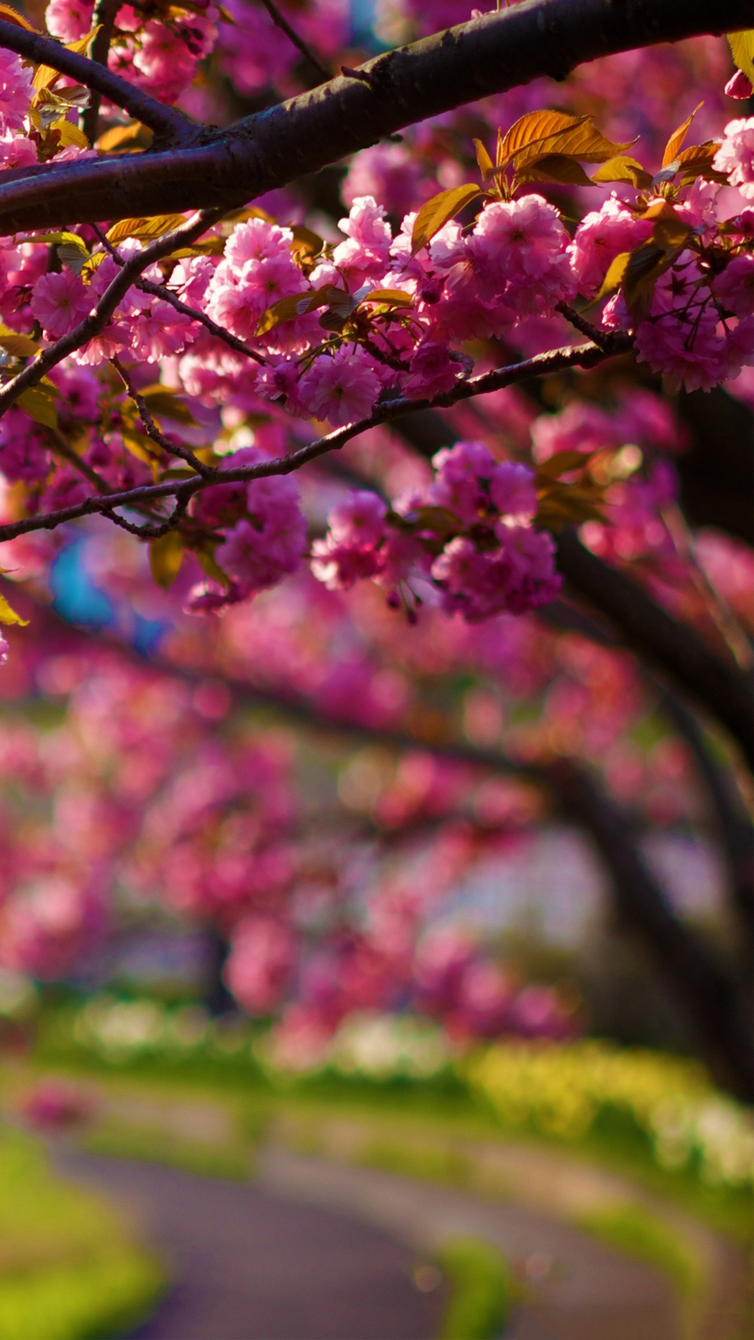 Spring Purple Flowers Tree Alley Bokeh Android Wallpaper 1080x1920