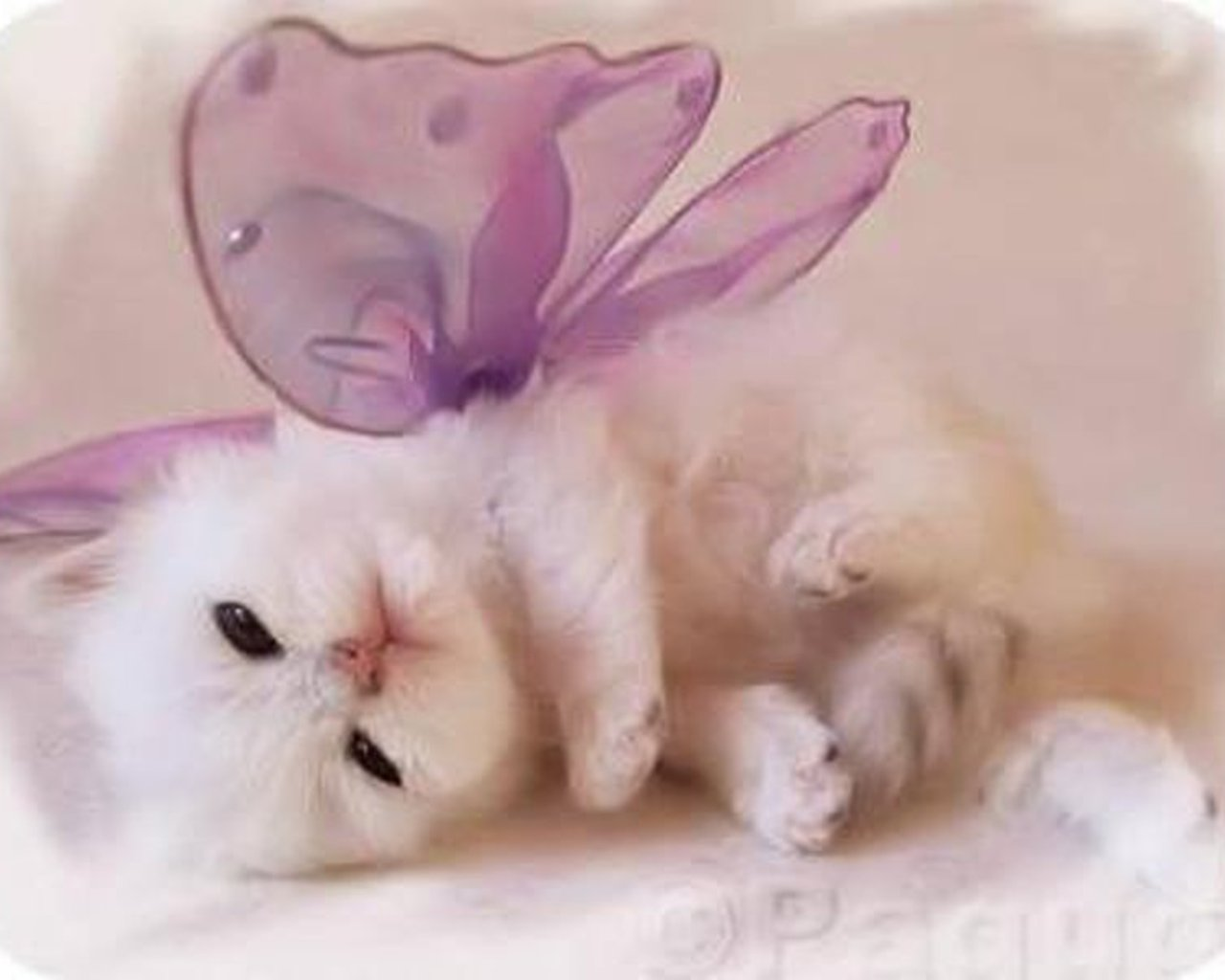 adorable kitten dressed Wallpaper 1280x1024