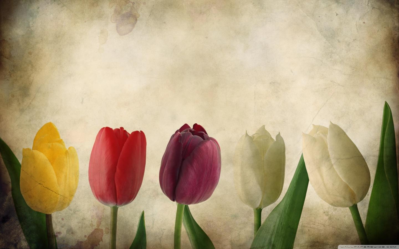 tulips vintage wallpaper flowerwallpaper beautifulflowerjpg 1440x900