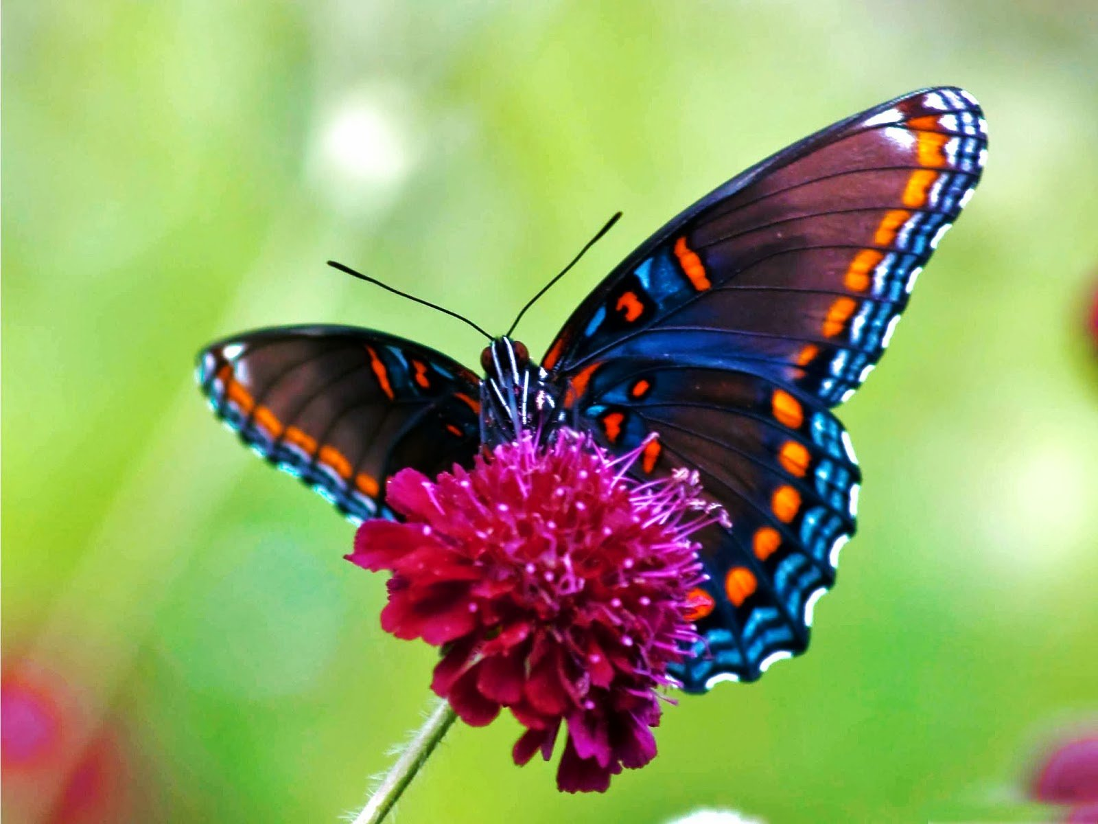 live butterfly wallpaper   beautiful desktop wallpapers 2014 1600x1200