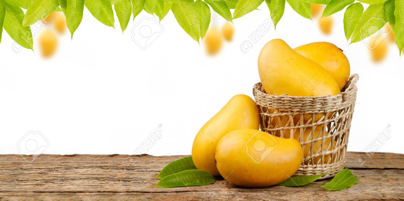 Yellow Mango In Basket On Wood Table With Mango Tree Background 1300x647