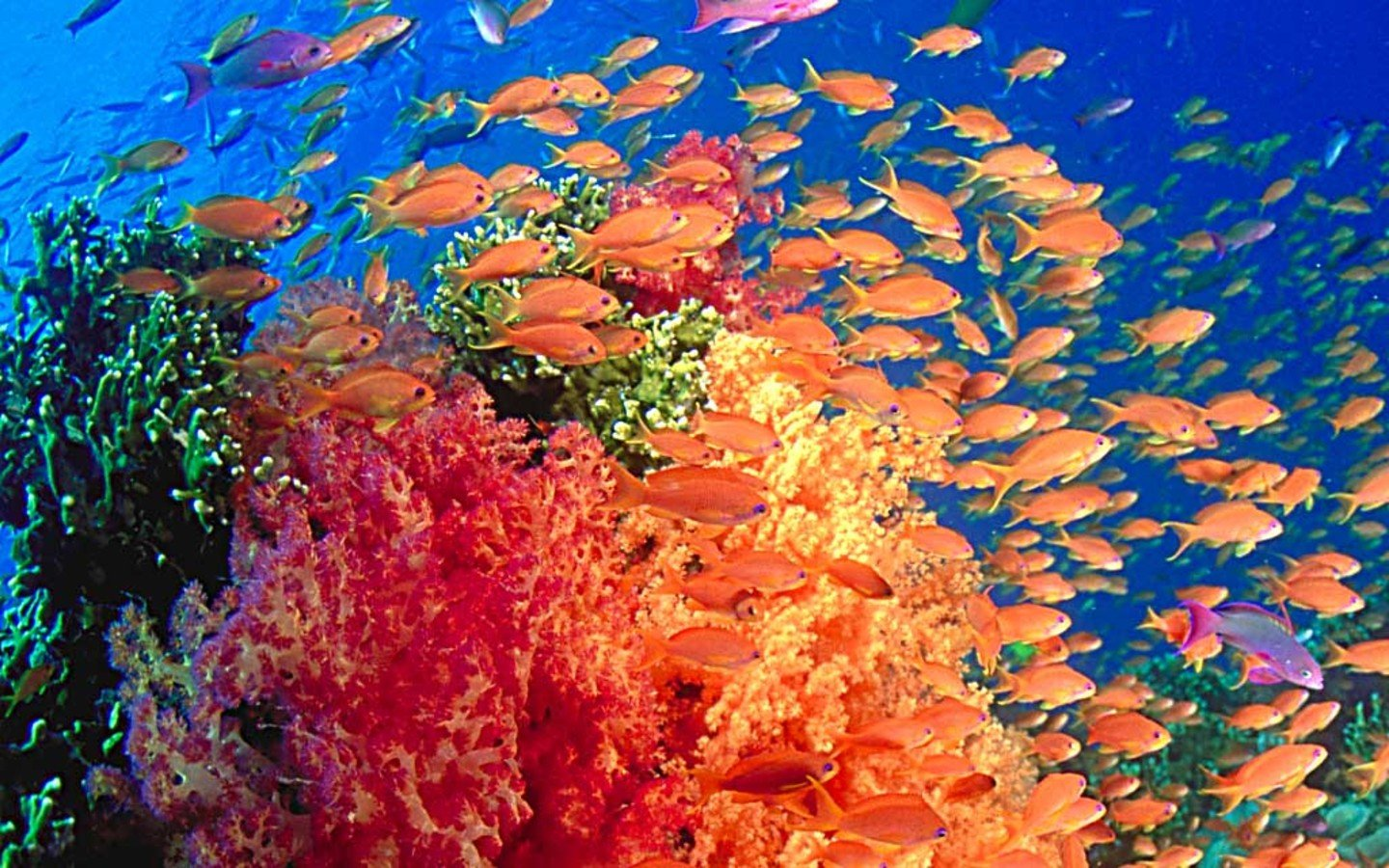 Wallpapers Ocean Life HD Wallpaper HQ Desktop Background 1440x900
