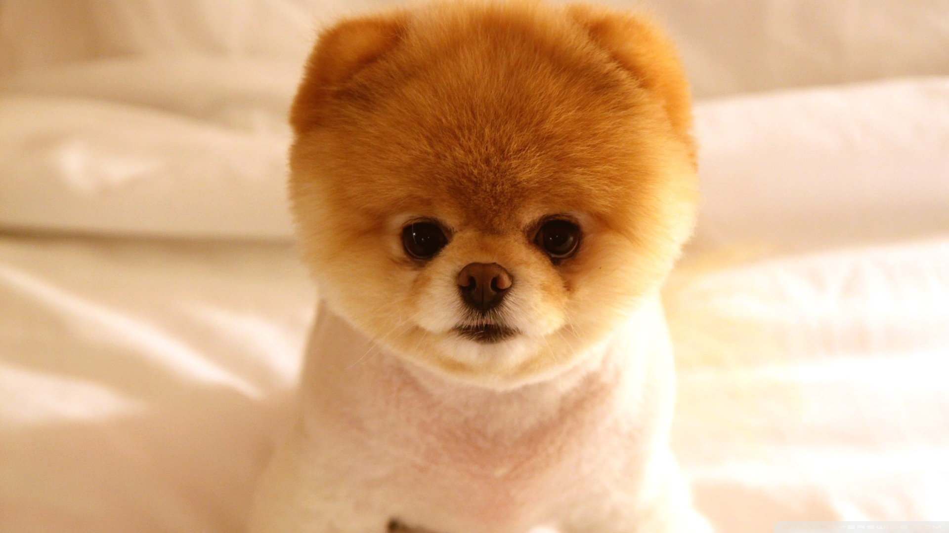 Cute dog 3   Doge Wallpaper 1920x1080 105592 1920x1080