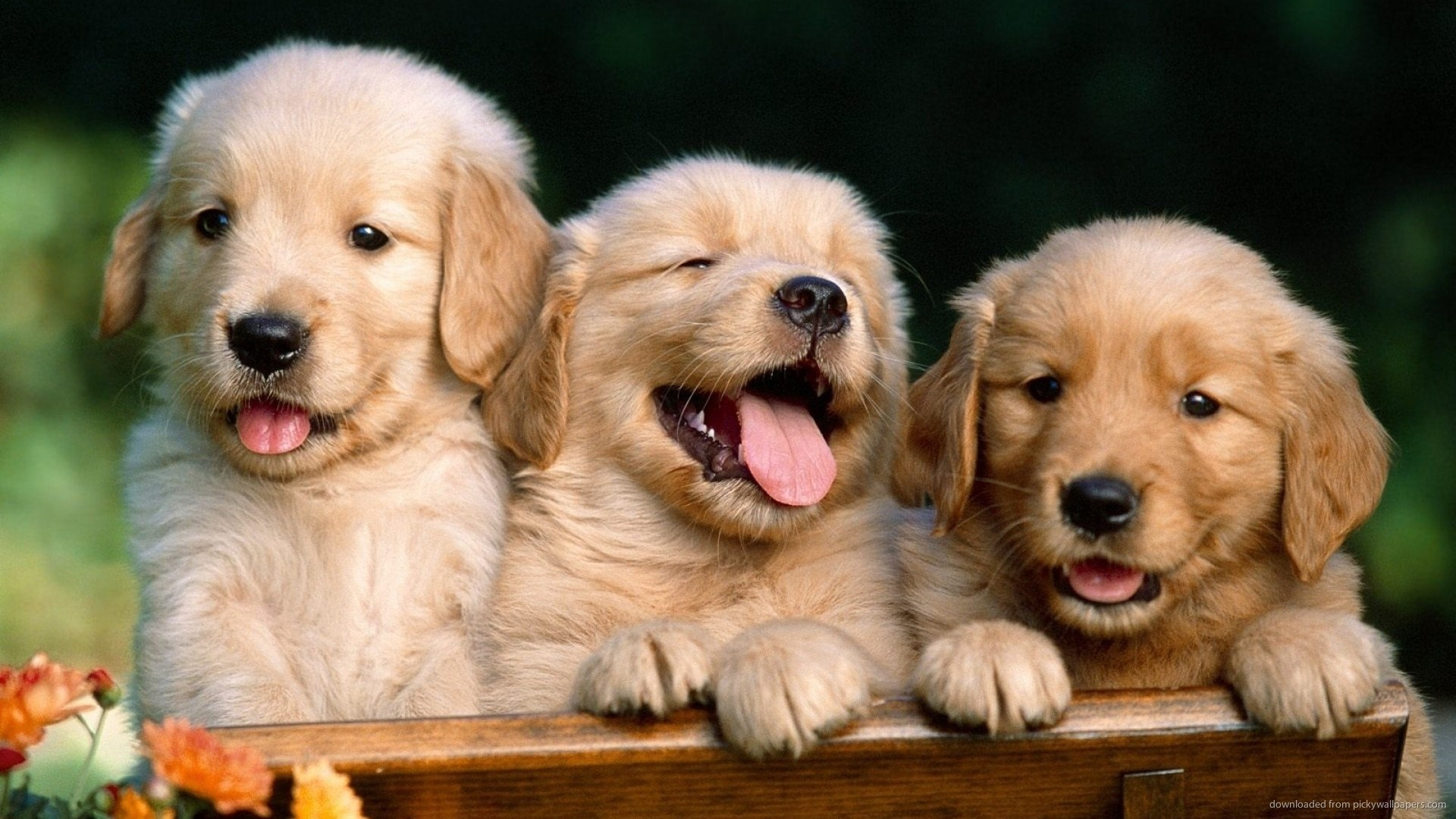 animals cute dogs nature puppy related wallpapers 1920x1080