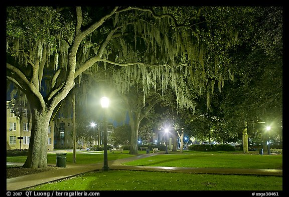night with Spanish Moss hanging from oak trees Savannah Georgia USA 576x393