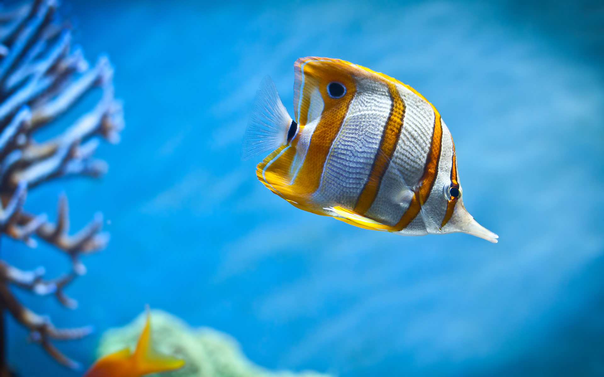 wallpaper of colorful butterfly fish swimming in the sea click to 1920x1200