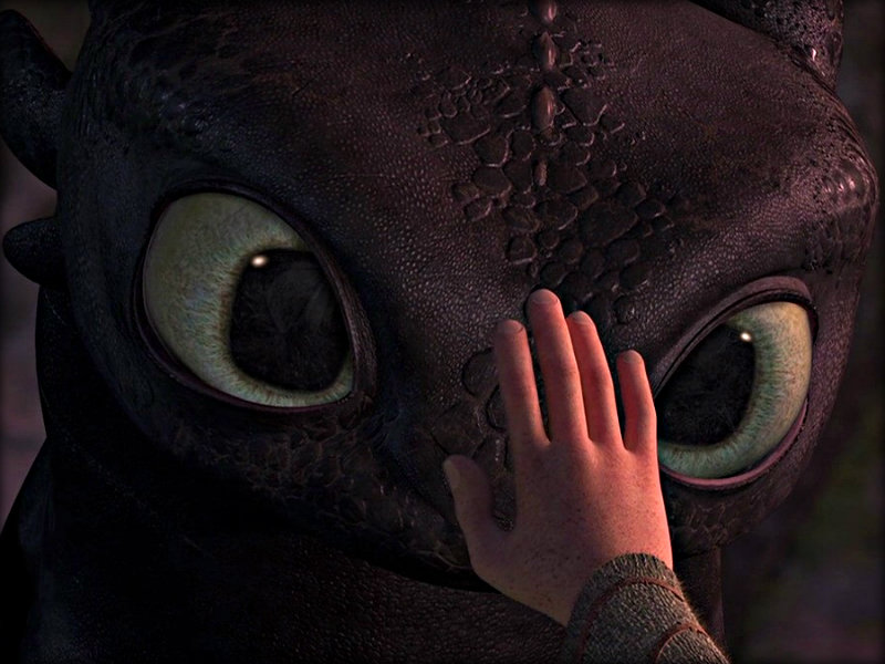 Toothless   Toothless the Dragon Wallpaper 32987032 800x600