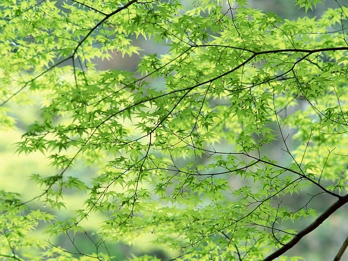 Spring nature photography   Spring wallpapers   Nature Spring Scene 700x525