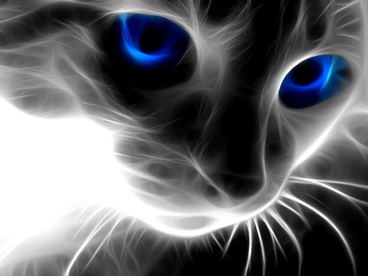 3D Cat Face Wallpapers   1280x960   192220 1280x960