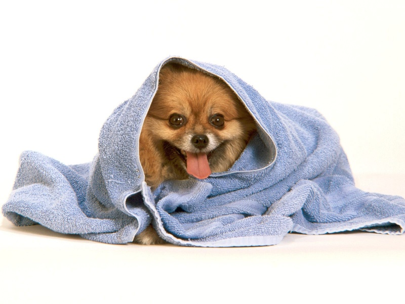 All Wallpapers Funny Dogs Wallpapers 800x600