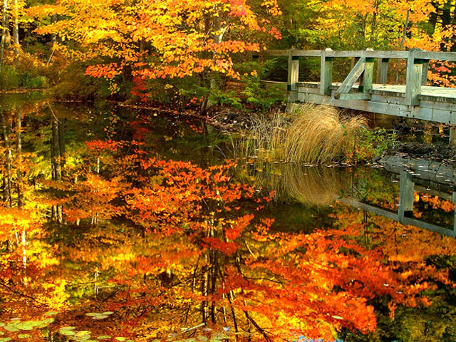 Fall themed screensaver 640x480
