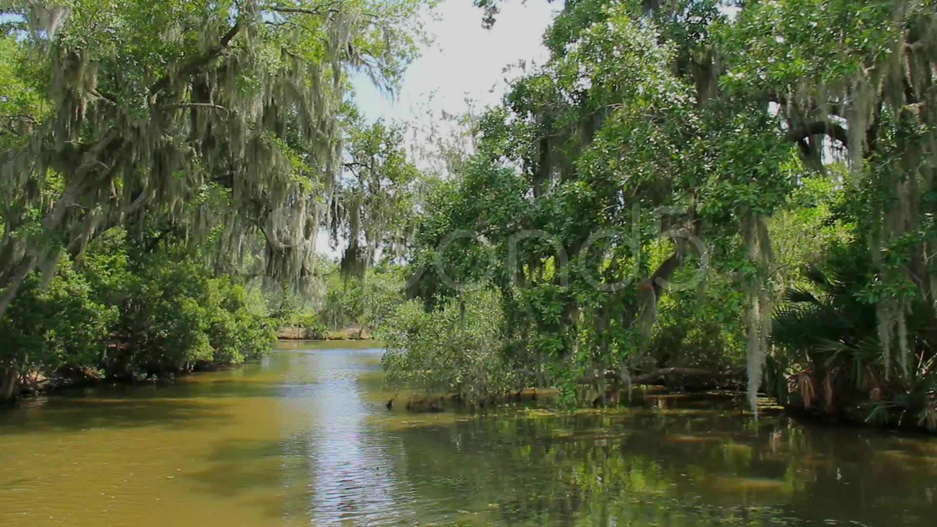 Bayou Swamp 2 SD HD 4K Stock Footage 11267748 Pond5 1920x1080
