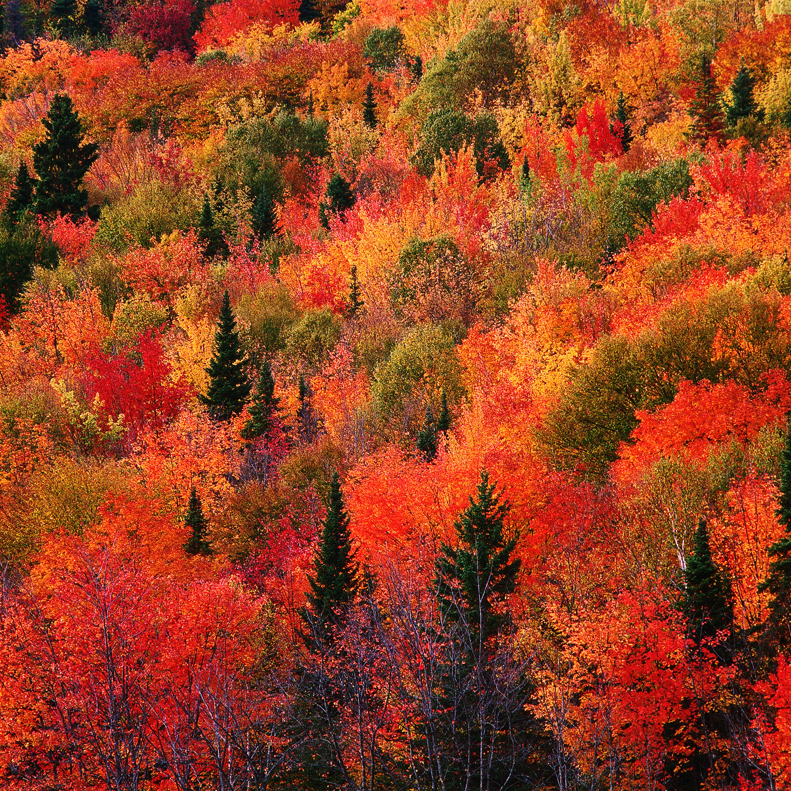 Colorful Fall wallpapers of the week 2524x2524