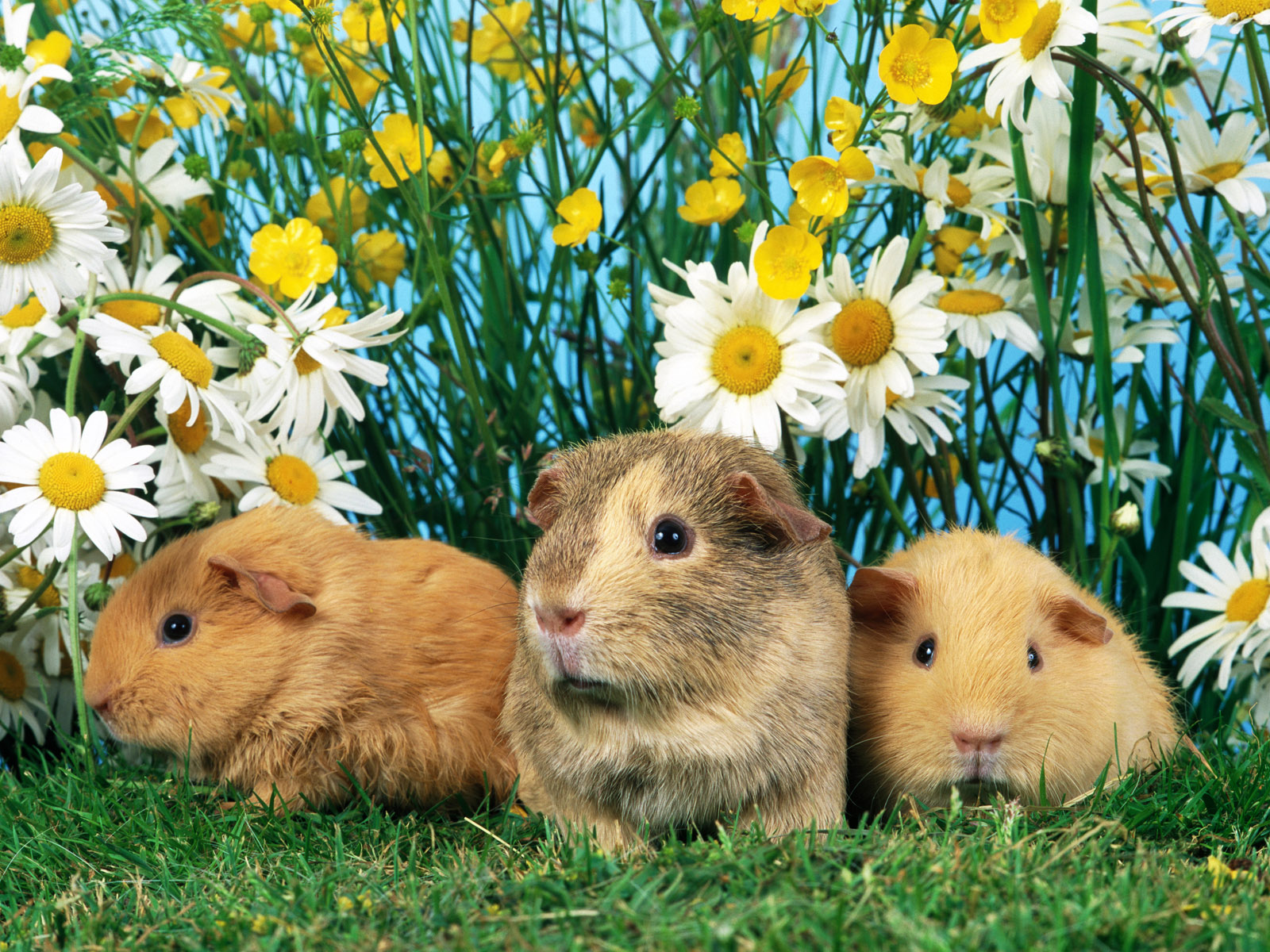 leave a comment wallpapers animals pets wallpapers wallpaper mini set 1600x1200